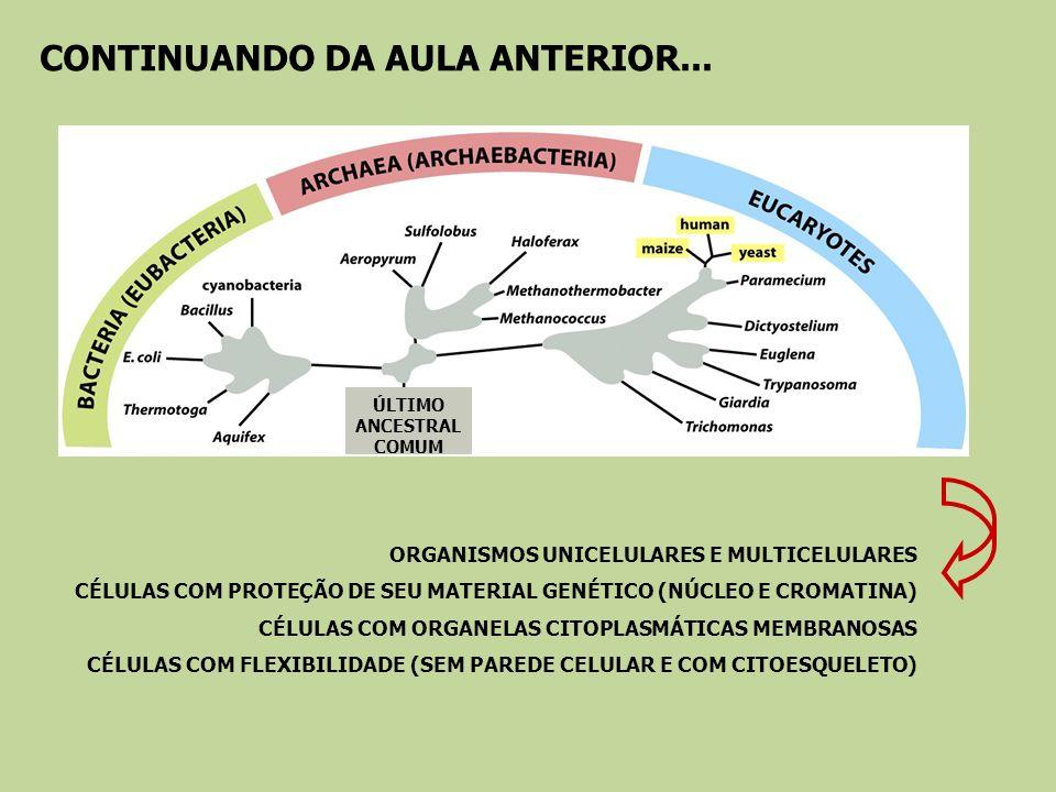 CONTINUANDO DA AULA ANTERIOR... ÚLTIMO ANCESTRAL COMUM ORGANISMOS UNICELULARES E MULTICELULARES CÉLULAS COM PROTEÇÃO DE SEU MATERIAL GENÉTICO (NÚCLEO