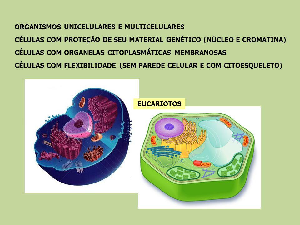 EUCARIOTOS ORGANISMOS UNICELULARES E MULTICELULARES CÉLULAS COM PROTEÇÃO DE SEU MATERIAL GENÉTICO (NÚCLEO E CROMATINA) CÉLULAS COM ORGANELAS CITOPLASM