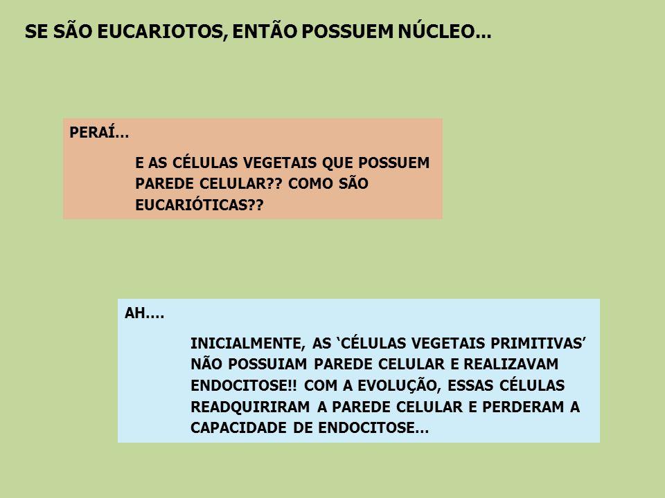 Possuem DNA circular; Formam-se por fissão binária, como nas bactérias; A inibição da síntese protéica ocorre pelos mesmos antibióticos bacterianos; O aminoácido iniciador da síntese protéica é a f-metionina, o mesmo das bactérias; São delimitados por dupla membrana, sendo a interna semelhante a das bactérias; O coeficiente de sedimentação dos ribossomos é semelhante ao de bactérias; Nas mitocôndrias, a presença da proteína porina na membrana interna, também encontrada em bactérias; EVIDÊNCIAS DA ORIGEM DE MITOCÔNDRIAS E CLOROPLASTOS