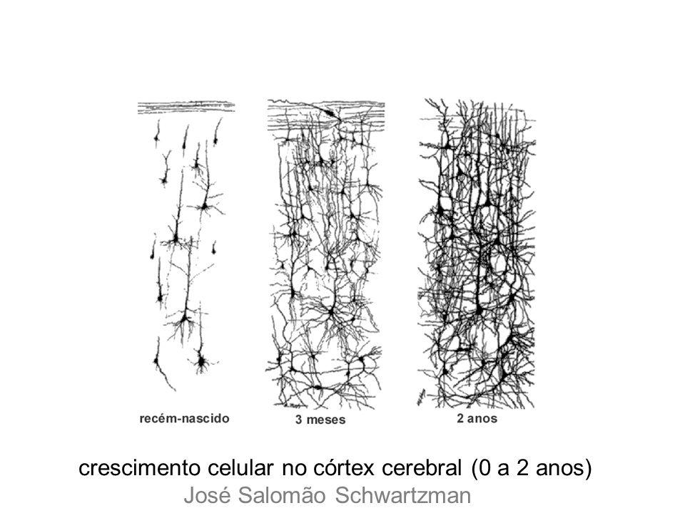 crescimento celular no córtex cerebral (0 a 2 anos) José Salomão Schwartzman