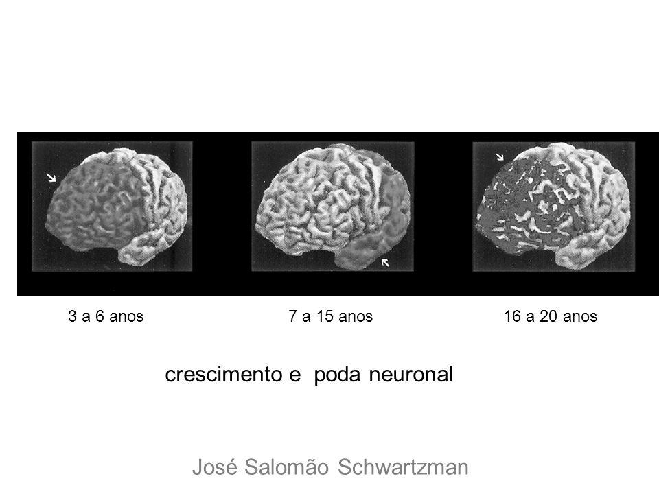 3 a 6 anos7 a 15 anos16 a 20 anos crescimento e poda neuronal José Salomão Schwartzman
