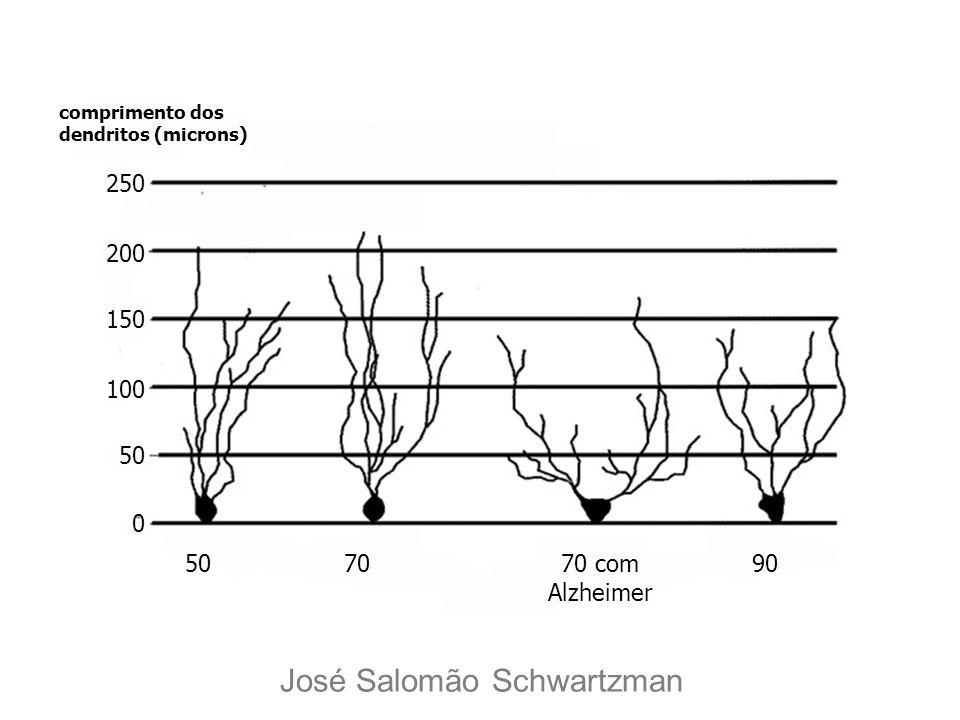 comprimento dos dendritos (microns) 250 200 150 100 50 0 7070 com Alzheimer 90 José Salomão Schwartzman