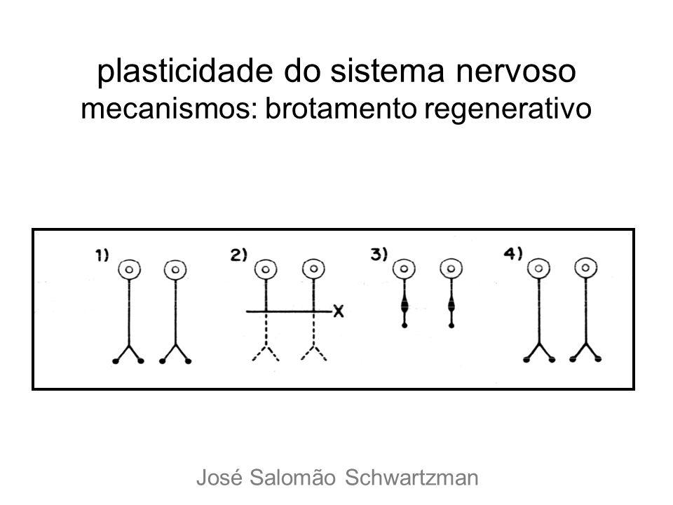 plasticidade do sistema nervoso mecanismos: brotamento regenerativo José Salomão Schwartzman
