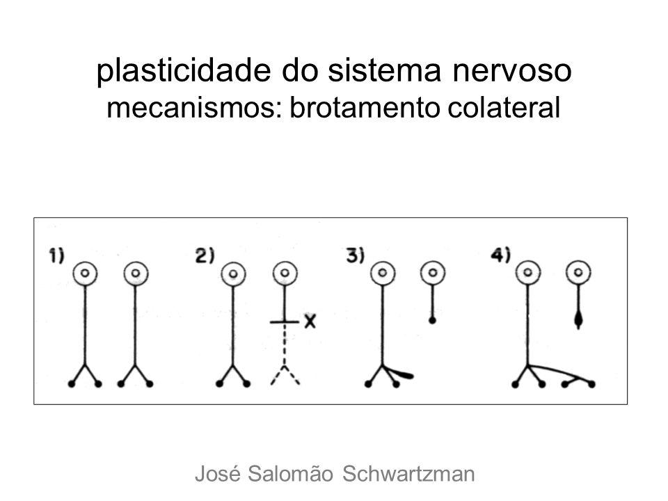 plasticidade do sistema nervoso mecanismos: brotamento colateral José Salomão Schwartzman