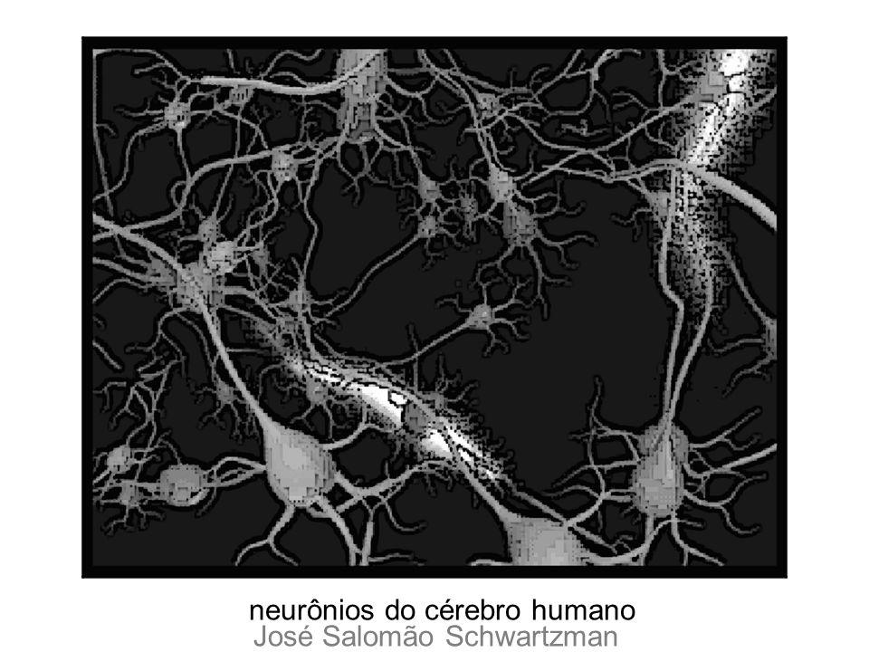 neurônios do cérebro humano José Salomão Schwartzman