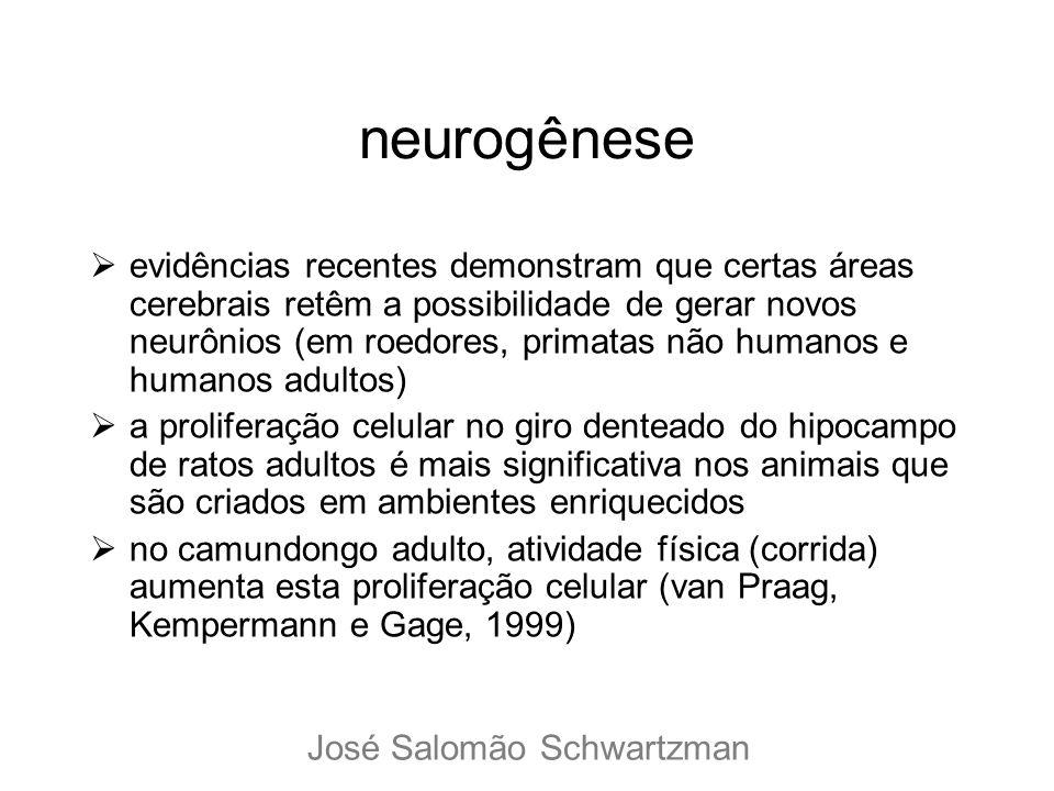 neurogênese evidências recentes demonstram que certas áreas cerebrais retêm a possibilidade de gerar novos neurônios (em roedores, primatas não humano