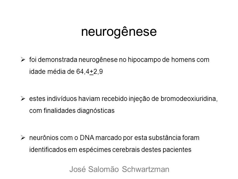 foi demonstrada neurogênese no hipocampo de homens com idade média de 64,4+2,9 estes indivíduos haviam recebido injeção de bromodeoxiuridina, com fina
