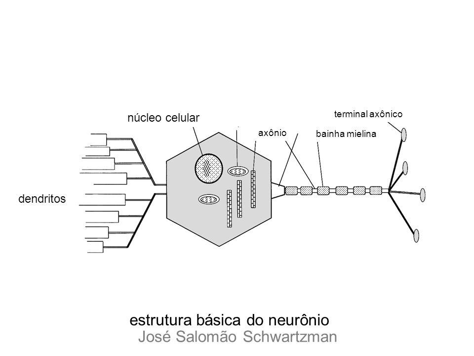 dendritos núcleo celular terminal axônico bainha mielina axônio estrutura básica do neurônio José Salomão Schwartzman