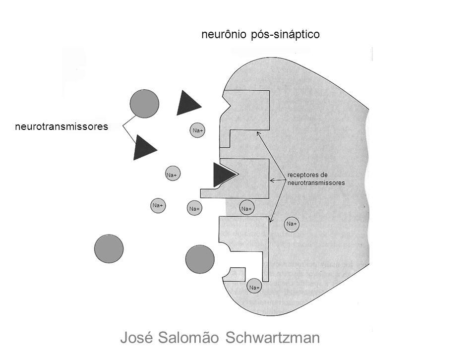 neurônio pós-sináptico receptores de neurotransmissores Na+ José Salomão Schwartzman