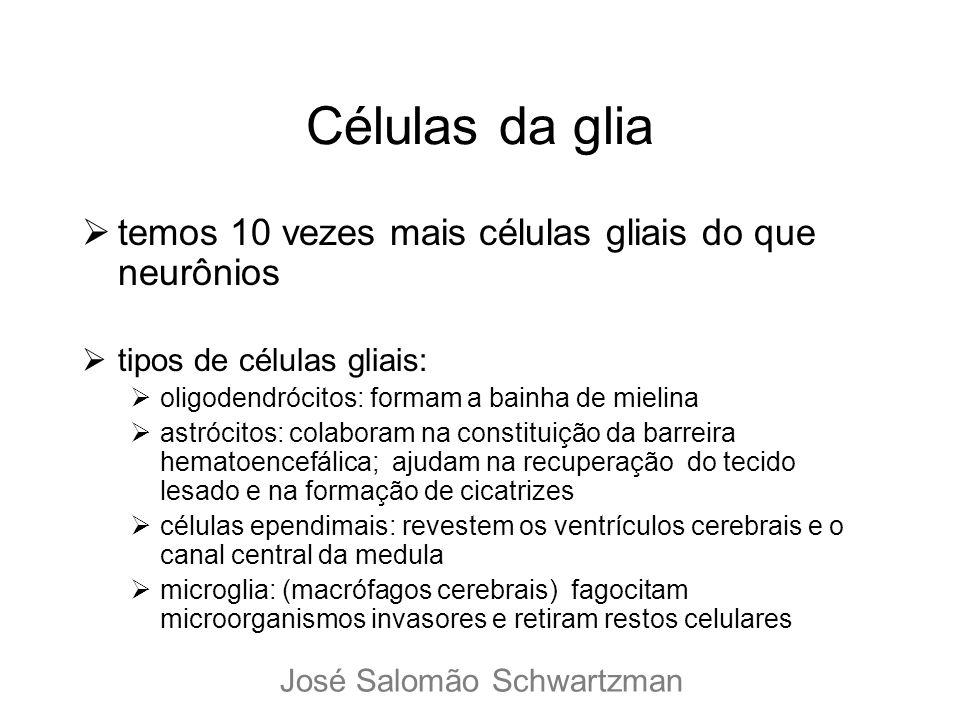 Células da glia temos 10 vezes mais células gliais do que neurônios tipos de células gliais: oligodendrócitos: formam a bainha de mielina astrócitos:
