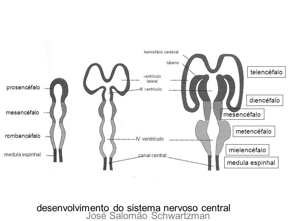 desenvolvimento do sistema nervoso central prosencéfalo mesencéfalo rombencéfalo medula espinhal telencéfalo diencéfalo mesencéfalo medula espinhal me