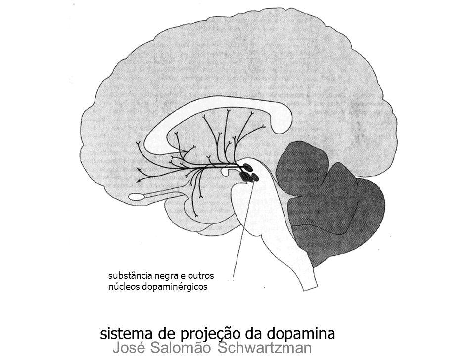 substância negra e outros núcleos dopaminérgicos sistema de projeção da dopamina José Salomão Schwartzman
