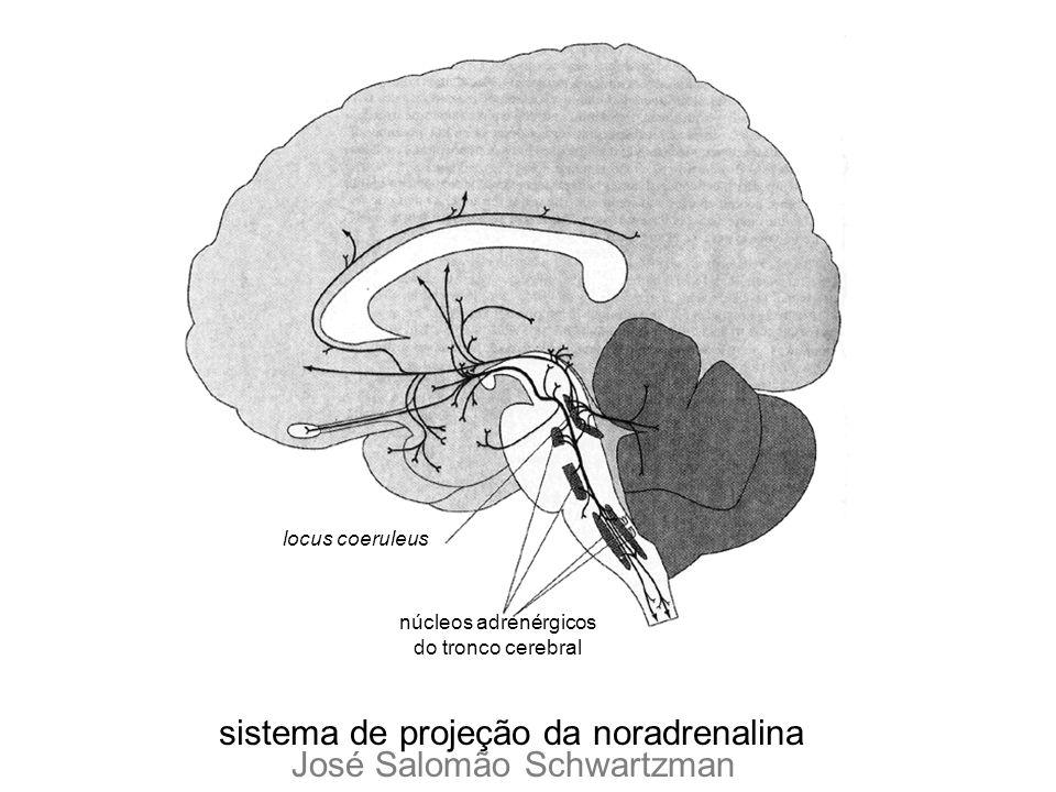 núcleos adrenérgicos do tronco cerebral locus coeruleus sistema de projeção da noradrenalina José Salomão Schwartzman