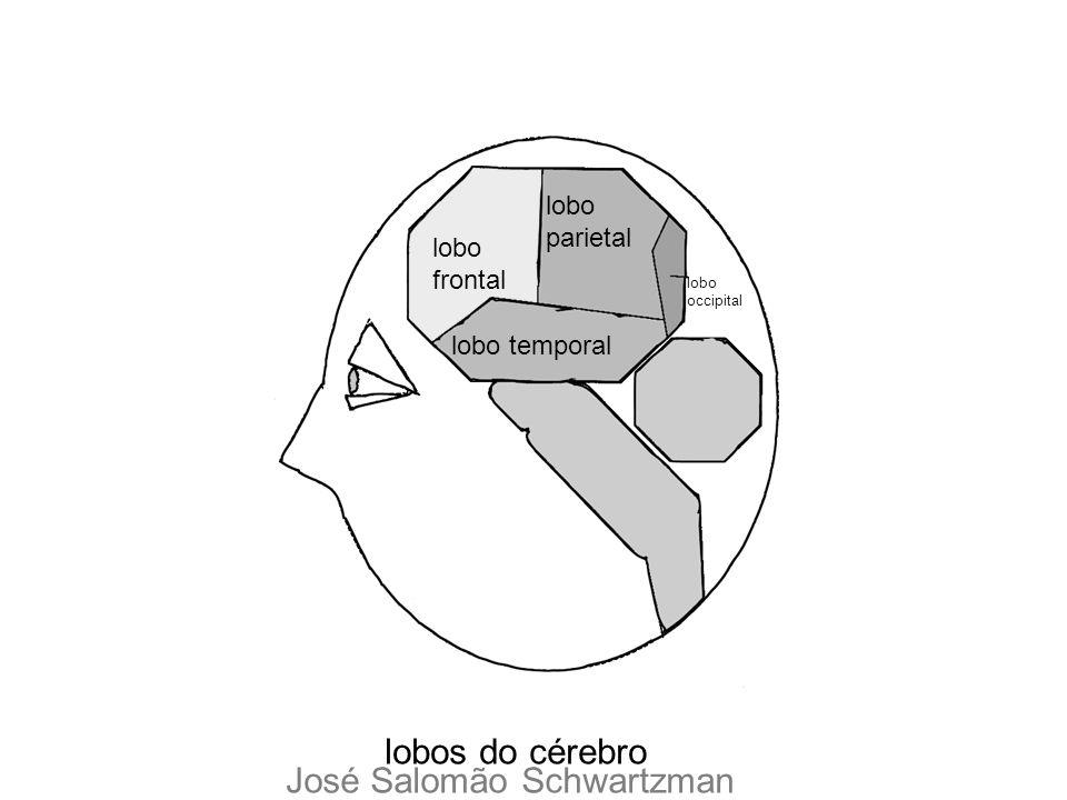 lobo frontal lobo parietal lobo temporal lobos do cérebro lobo occipital José Salomão Schwartzman