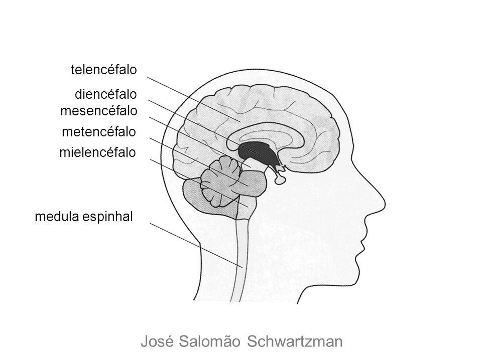 telencéfalo diencéfalo mesencéfalo metencéfalo mielencéfalo medula espinhal José Salomão Schwartzman