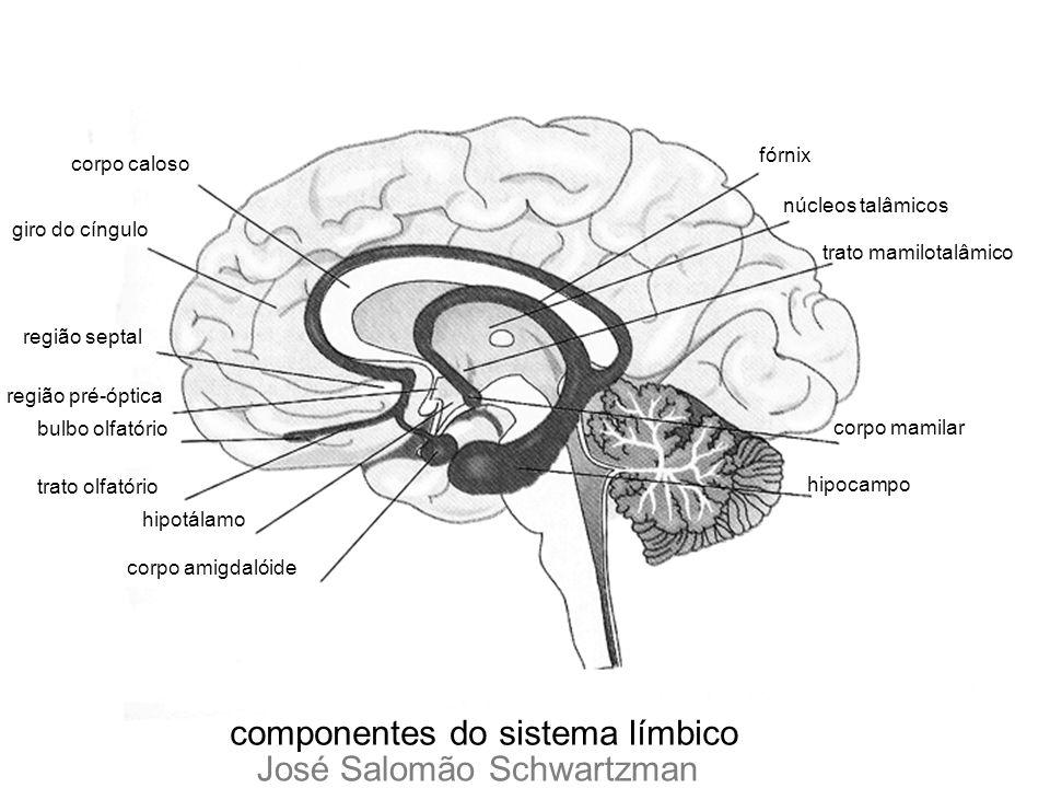 componentes do sistema límbico corpo caloso giro do cíngulo região septal região pré-óptica bulbo olfatório trato olfatório hipotálamo corpo amigdalói