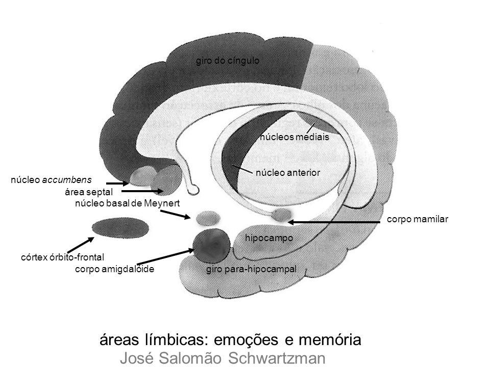 áreas límbicas: emoções e memória giro para-hipocampal hipocampo córtex órbito-frontal corpo amigdalóide núcleo basal de Meynert corpo mamilar giro do