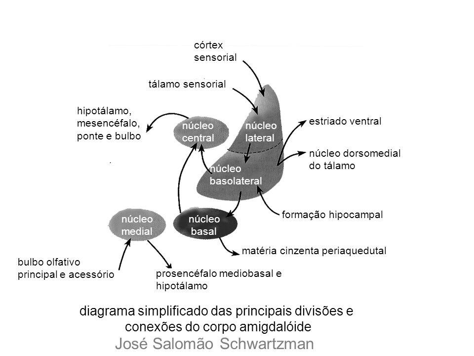núcleo medial núcleo basal núcleo central núcleo lateral núcleo basolateral córtex sensorial tálamo sensorial hipotálamo, mesencéfalo, ponte e bulbo b