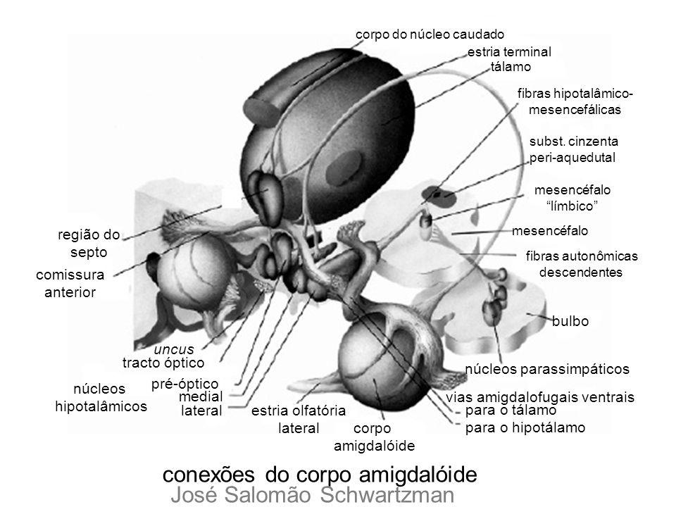 conexões do corpo amigdalóide corpo do núcleo caudado estria terminal tálamo fibras hipotalâmico- mesencefálicas subst. cinzenta peri-aquedutal mesenc