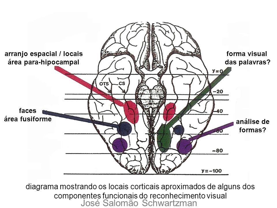 arranjo espacial / locais área para-hipocampal faces área fusiforme forma visual das palavras? análise de formas? diagrama mostrando os locais cortica