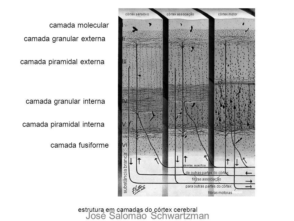 estrutura em camadas do córtex cerebral córtex sensitivocórtex associação córtex motor aferentes específicos de outras partes do córtex para outras pa