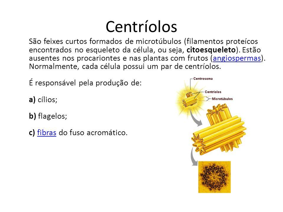 Centríolos São feixes curtos formados de microtúbulos (filamentos proteícos encontrados no esqueleto da célula, ou seja, citoesqueleto).