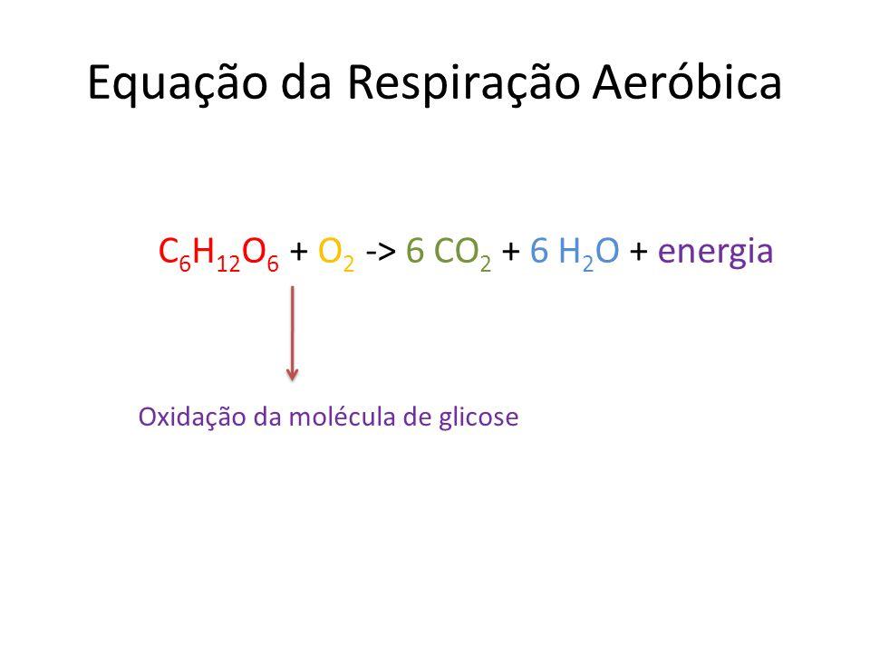 Equação da Respiração Aeróbica C 6 H 12 O 6 + O 2 -> 6 CO 2 + 6 H 2 O + energia Oxidação da molécula de glicose