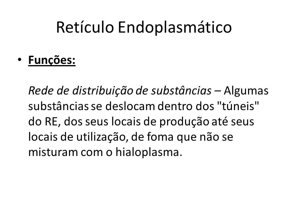 Retículo Endoplasmático Funções: Rede de distribuição de substâncias – Algumas substâncias se deslocam dentro dos túneis do RE, dos seus locais de produção até seus locais de utilização, de foma que não se misturam com o hialoplasma.