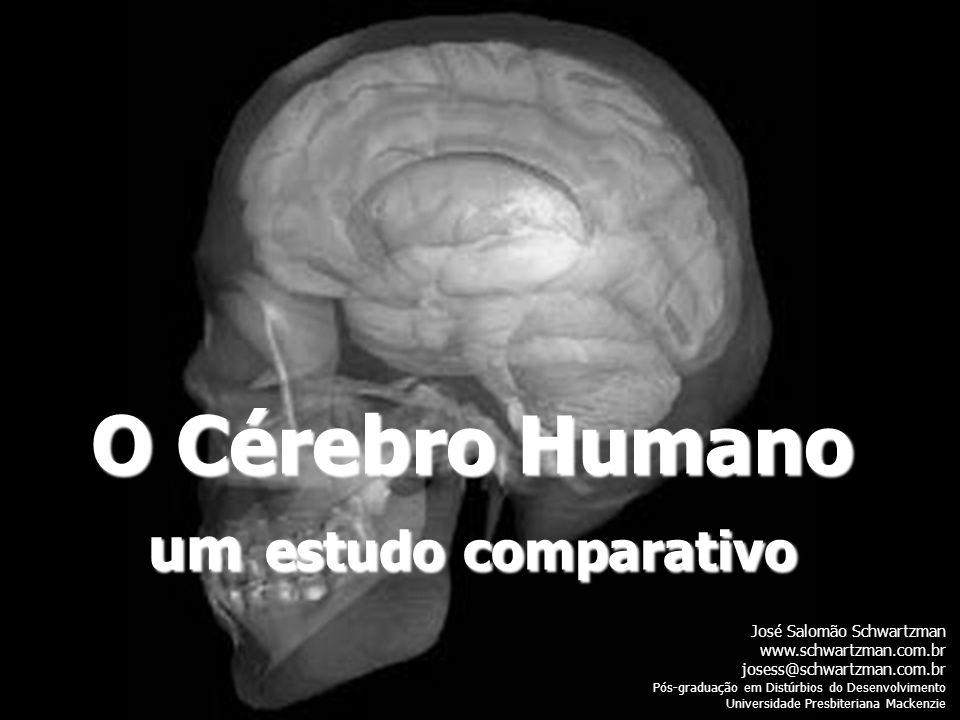 O Cérebro Humano um estudo comparativo José Salomão Schwartzman www.schwartzman.com.br josess@schwartzman.com.br Pós-graduação em Distúrbios do Desenv