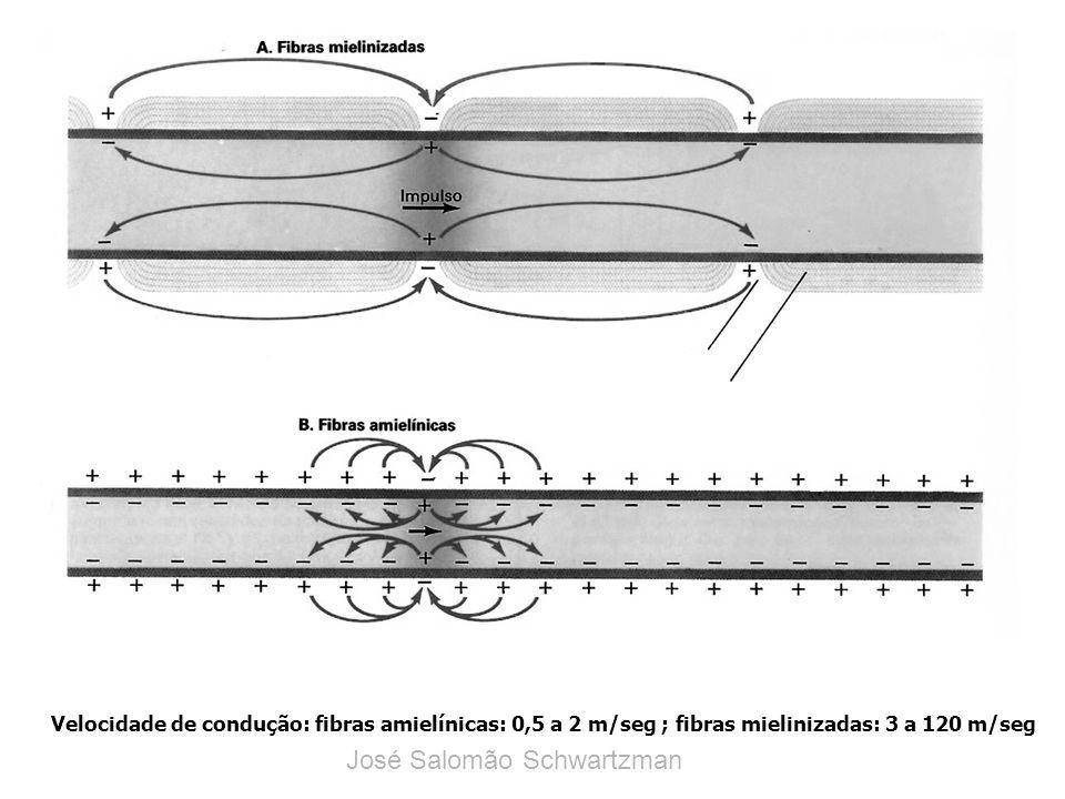 Velocidade de condução: fibras amielínicas: 0,5 a 2 m/seg ; fibras mielinizadas: 3 a 120 m/seg José Salomão Schwartzman