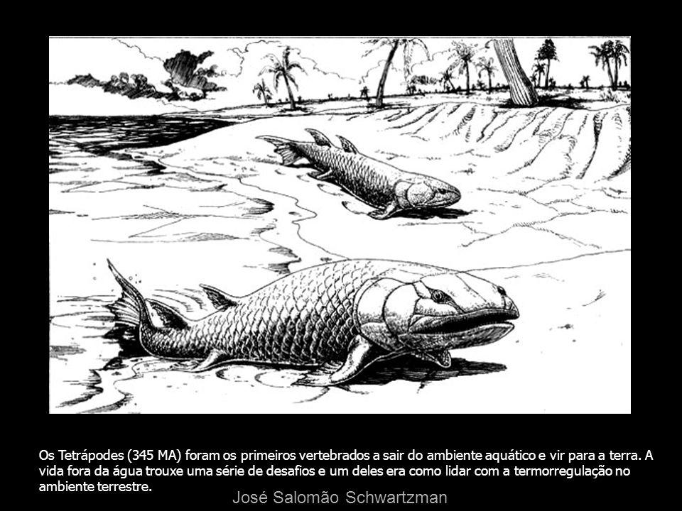 Os Tetrápodes (345 MA) foram os primeiros vertebrados a sair do ambiente aquático e vir para a terra. A vida fora da água trouxe uma série de desafios