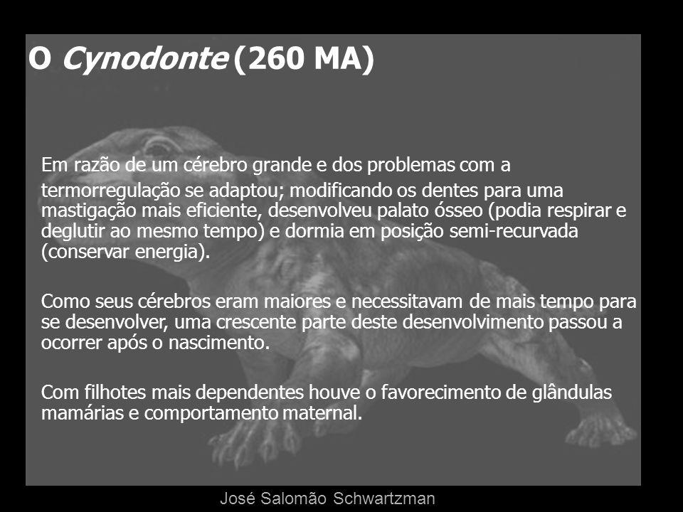 O Cynodonte (260 MA) Em razão de um cérebro grande e dos problemas com a termorregulação se adaptou; modificando os dentes para uma mastigação mais ef