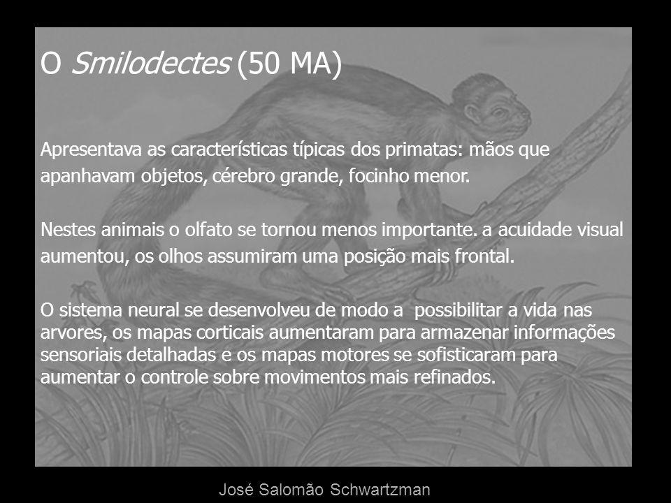 O Smilodectes (50 MA) Apresentava as características típicas dos primatas: mãos que apanhavam objetos, cérebro grande, focinho menor. Nestes animais o