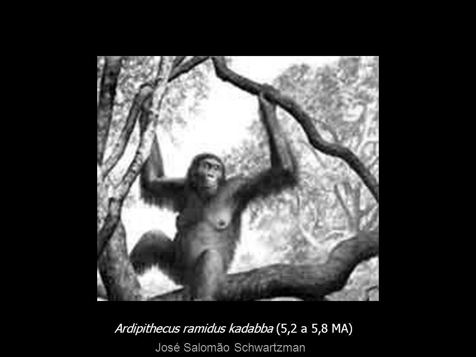 Ardipithecus ramidus kadabba (5,2 a 5,8 MA) José Salomão Schwartzman