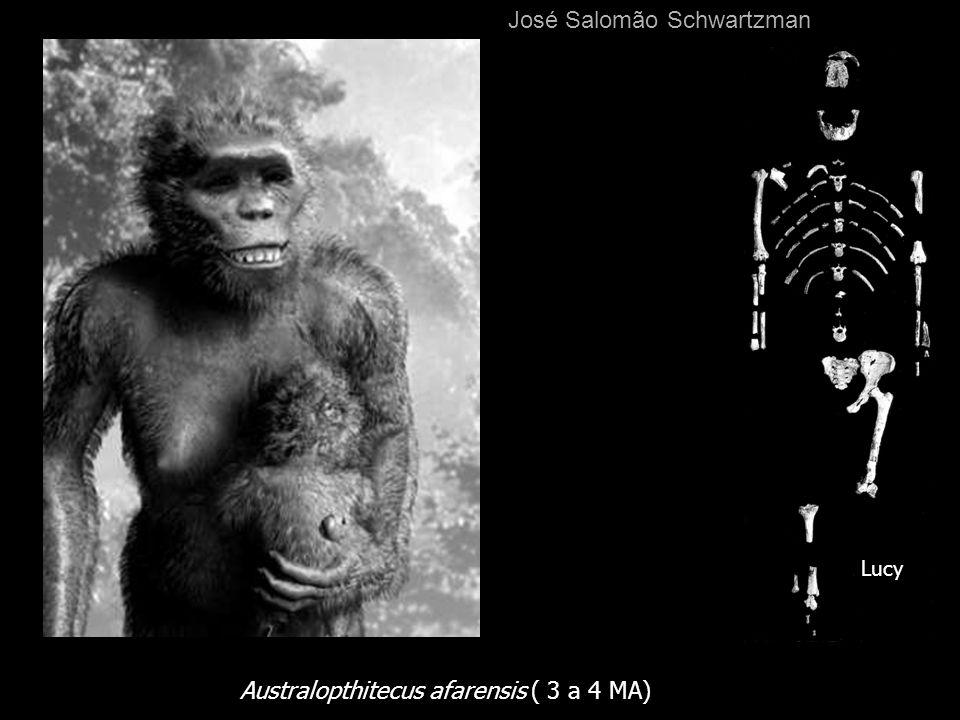Australopthitecus afarensis ( 3 a 4 MA) Lucy José Salomão Schwartzman