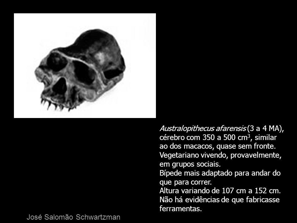 Australopithecus afarensis (3 a 4 MA), cérebro com 350 a 500 cm 3, similar ao dos macacos, quase sem fronte. Vegetariano vivendo, provavelmente, em gr