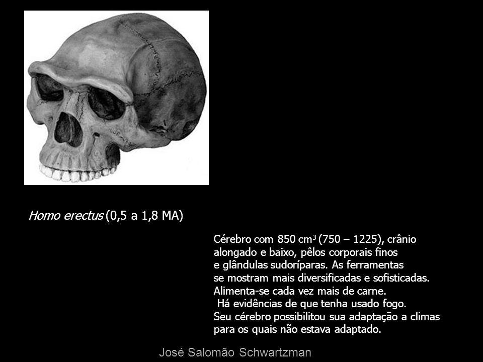 Homo erectus (0,5 a 1,8 MA) Cérebro com 850 cm 3 (750 – 1225), crânio alongado e baixo, pêlos corporais finos e glândulas sudoríparas. As ferramentas