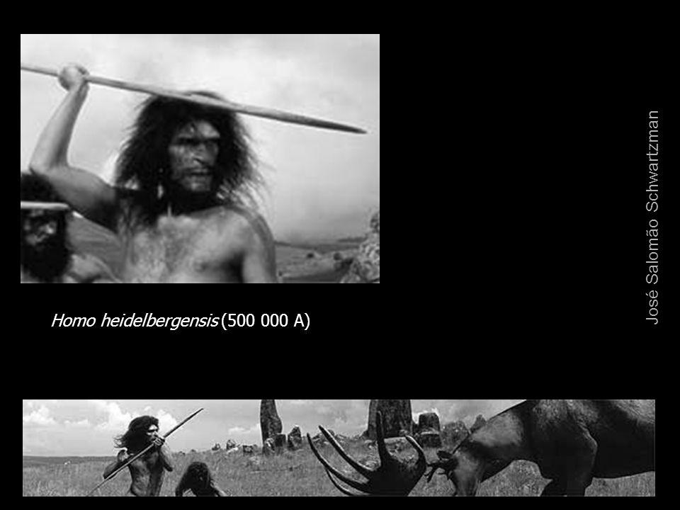 Homo heidelbergensis (500 000 A) José Salomão Schwartzman