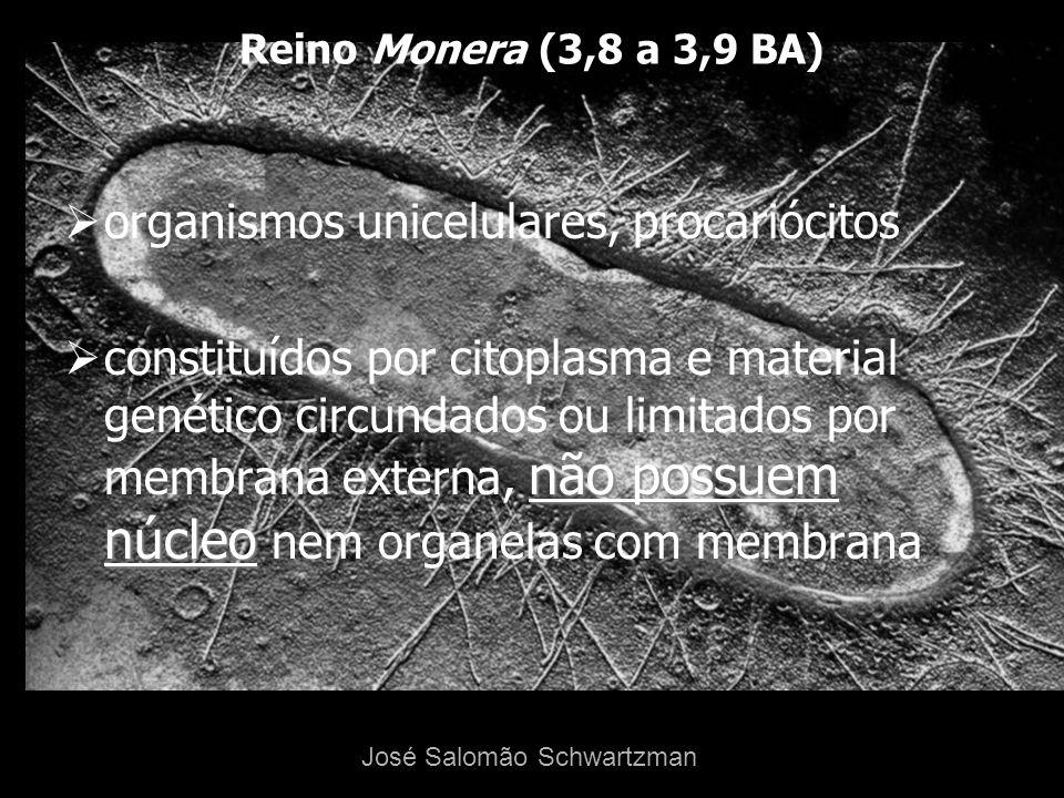 Evidências de comportamento simbólico com 77 000 A: caverna de Blombos José Salomão Schwartzman