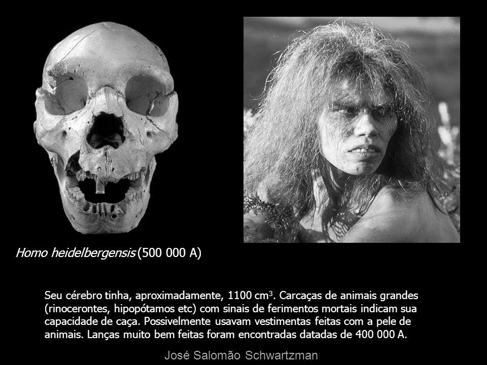 Homo heidelbergensis (500 000 A) Seu cérebro tinha, aproximadamente, 1100 cm 3. Carcaças de animais grandes (rinocerontes, hipopótamos etc) com sinais