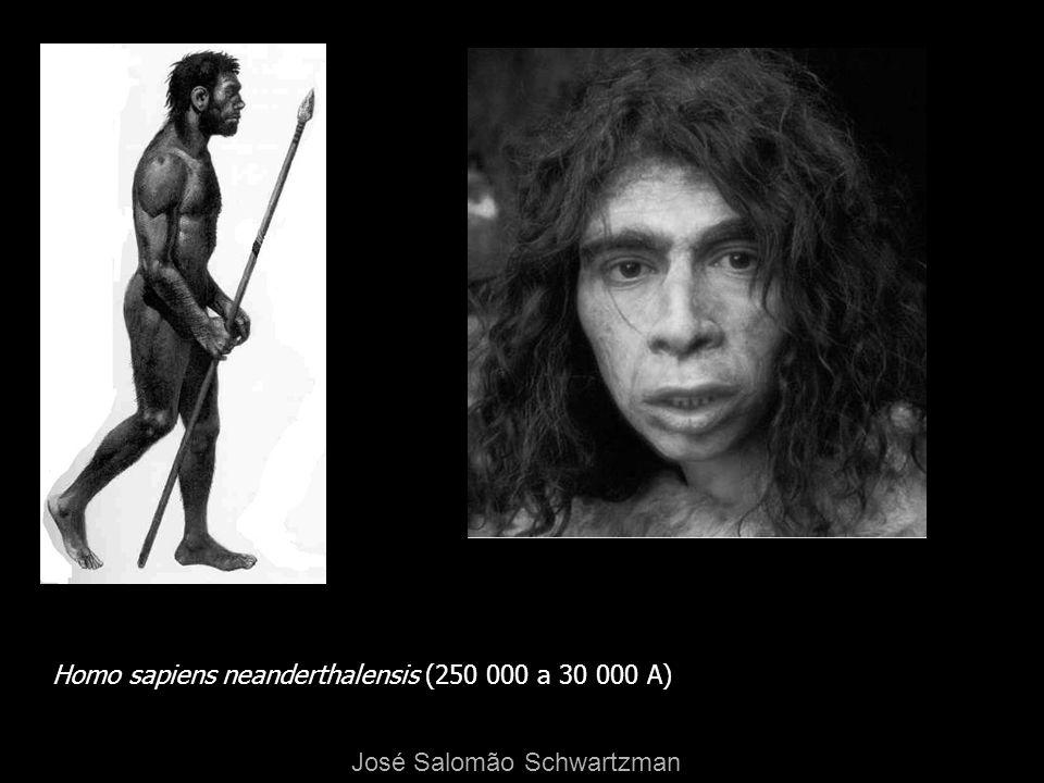 Homo sapiens neanderthalensis (250 000 a 30 000 A) José Salomão Schwartzman