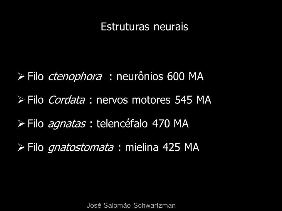 Estruturas neurais Filo ctenophora : neurônios 600 MA Filo Cordata : nervos motores 545 MA Filo agnatas : telencéfalo 470 MA Filo gnatostomata : mieli