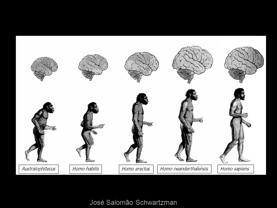 AustralophitecusHomo habilisHomo erectus Homo neanderthalensisHomo sapiens José Salomão Schwartzman