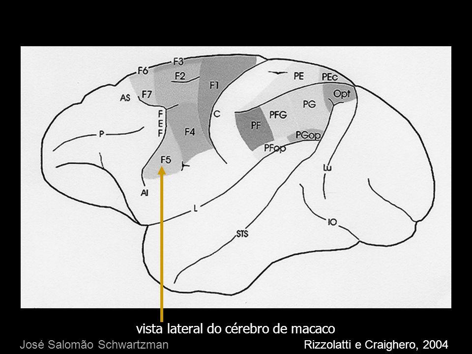 vista lateral do cérebro de macaco Rizzolatti e Craighero, 2004 José Salomão Schwartzman