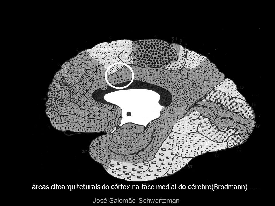 áreas citoarquiteturais do córtex na face medial do cérebro(Brodmann) José Salomão Schwartzman