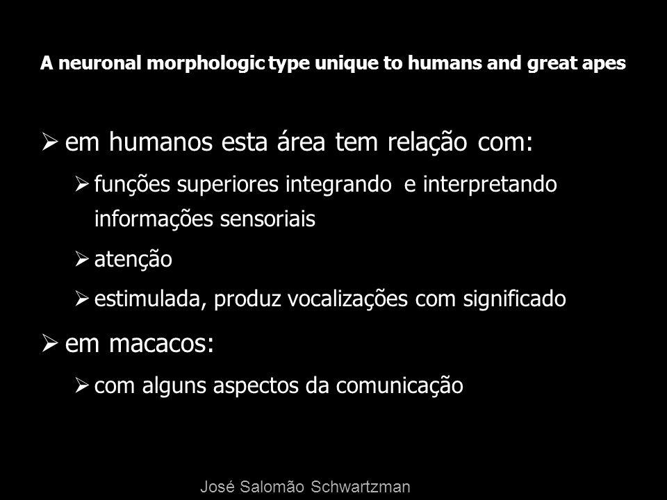 A neuronal morphologic type unique to humans and great apes em humanos esta área tem relação com: funções superiores integrando e interpretando inform