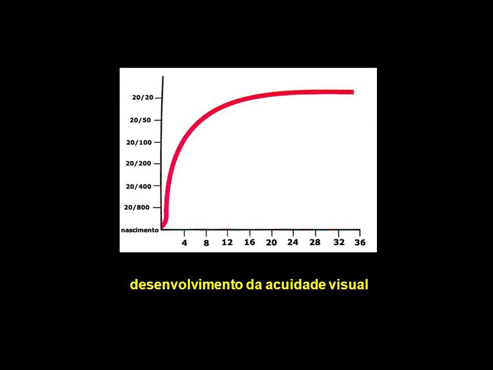 desenvolvimento da acuidade visual