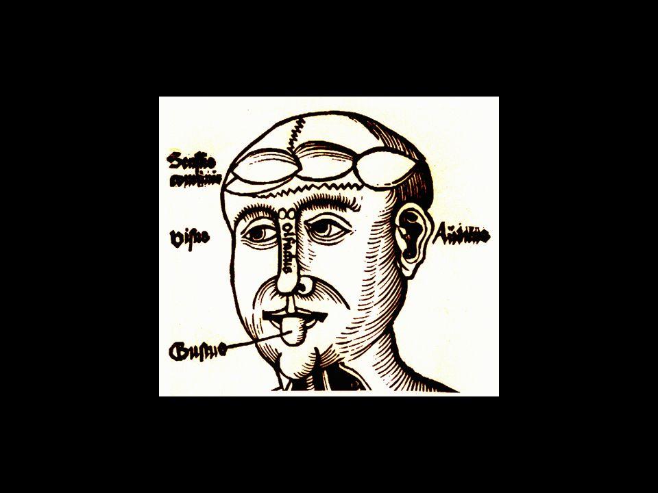 Compendiosa de Johannes Peyligk (1516) mostrando os ventrículos e identificando os órgãos dos sentidos