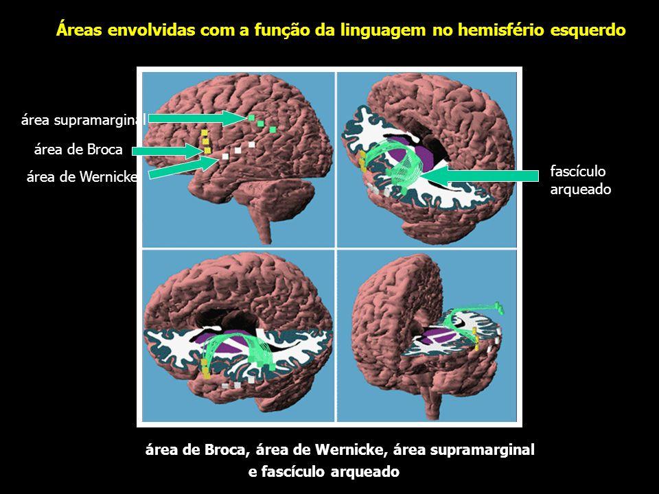 área pré-motora área somatomotora área de Broca área auditiva área somestésica área de Wernicke área visual modificado de Rohen e Yokochi, 1992 hemisf