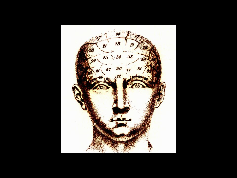 fotografia do cérebro de Lelong (84 anos), o segundo paciente afásico de Broca